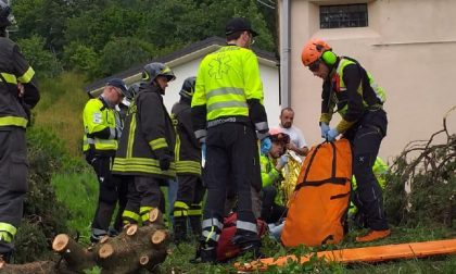 Cade mentre sta tagliando una pianta: è grave un 48enne