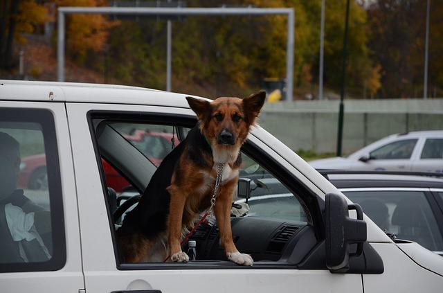 Cinque consigli per viaggiare con il cane in auto