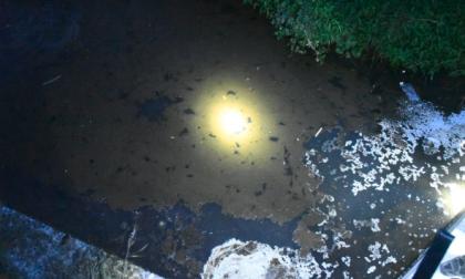 Sversamenti nel torrente Bevera: la questione inquinamento arriva in Regione