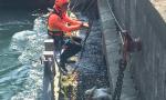 Cigno salvato dai Vigili del fuoco: era rimasto intrappolato FOTO