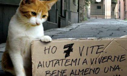 Oggi è la Giornata mondiale del gatto VIDEO | Test: e tu che micio sei?