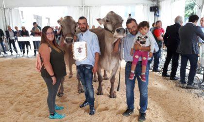 Manifestazioni Zootecniche Valsassinesi, ecco i vincitori TUTTE LE FOTO