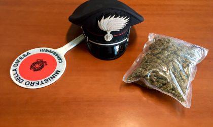 Nel boschetto dietro casa oltre un etto di marijuana: arrestato 19enne