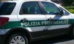 Mancano gli agenti: la Provincia sospende il servizio notturno di recupero e soccorso animali