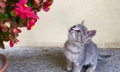 "Abbandonata e ""lanciata"" in un giardino gattina rimane infilzata in una siepe"