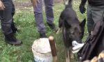 Blitz nel bosco della droga: pusher in manette. Arrestato uno spacciatore anche in stazione a Lecco FOTO E VIDEO