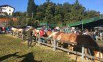 A Carenno la 28^ Fiera agricola della Valle San Martino