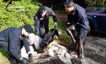 Controlli nel bosco della droga, una denuncia FOTO