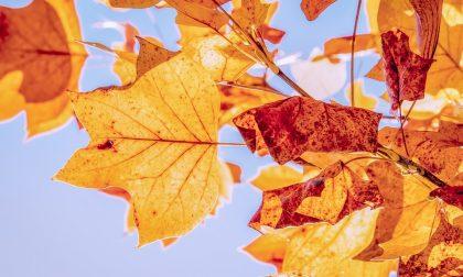 Autunno bollente anche a Como-Lecco:  non cadono le foglie e pungono le zanzare