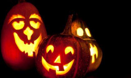 Halloween 2019, acquisti-boom: 1 kg di zucche a testa  a Como-Lecco