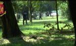 Spaccio nei boschi del del Lecchese: in arrivo una task force