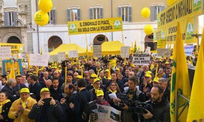"""L'allarme cinghiali a Como-Lecco esce  dai confini: ne parla il britannico """"The Guardian"""""""