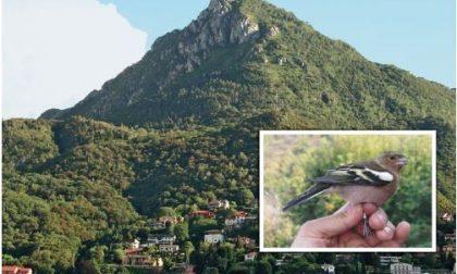 """""""In volo"""": al via la mostra alla Torre Viscontea"""