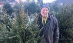 Albero di Natale: quello a KM 0 salva i terreni lariani