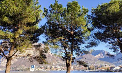 """Il """"No"""" delle associazioni ambientaliste per il taglio dei pini sul lungolago di Malgrate"""