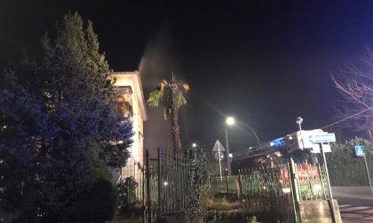 Petardo incendia palma a Villa d'Adda FOTO