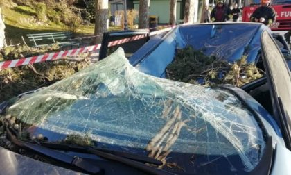 Tragedia sfiorata sul Lungolago a Lecco per il vento: albero si abbatte su un'auto FOTO