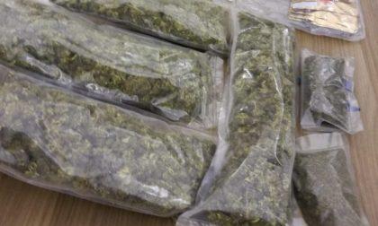 Dalla cannabis light a quella illegale nell'azienda agricola: arrestato 44enne