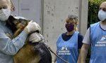 L'emozionante incontro tra il cane e i suoi  padroni usciti dall'ospedale dopo aver sconfitto il Coronavirus VIDEO