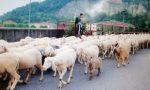 Tremila pecore attraversano la città di Lecco ECCO il VIDEO