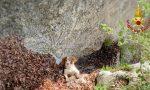 Precipita in un canalone: cagnolino salvato dai Vigili del Fuoco FOTO