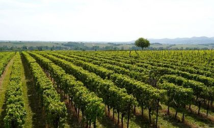 """Como-Lecco: agricoltura lariana è """"green"""", biodiversità vince tra alpeggi e vigne antiche"""