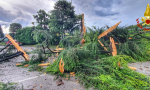 Fulmine colpisce un albero di 20 metri: la pianta esplode FOTO