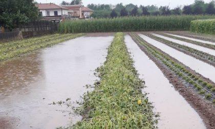 Maltempo, la grandine è tornata a flagellare  le due province lariane: danni ingenti nei campi