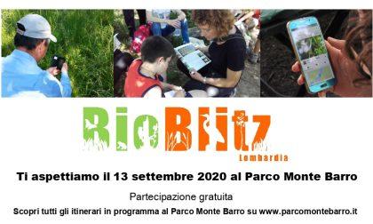 BioBlitz al Parco Monte Barro: diventa naturalista per un giorno