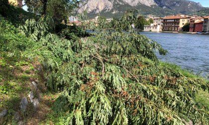 Il vento sradica una pianta che si schianta sulla pista ciclabile FOTO