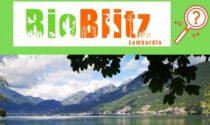 Torna il tradizionale appuntamento con Parco Monte Barro: il BioBlitz