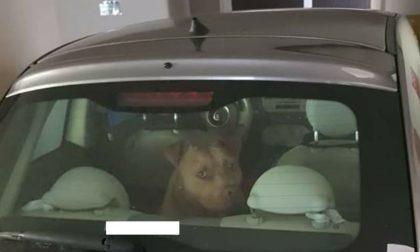 Cane segregato in auto in garage  e al buio: scatta la denuncia degli animalisti