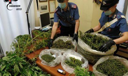 Sul Lago scovata una piantagione di cannabis, la coltivava un 55enne FOTO