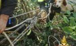 Cane da caccia precipita in dirupo: salvato dai Vigili del fuoco