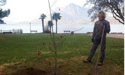 Piantati cinque alberi in memoria delle vittime del Covid FOTO