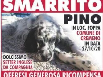 Cane smarrito sui monti: i padroni offrono una ricompensa da 2000 euro