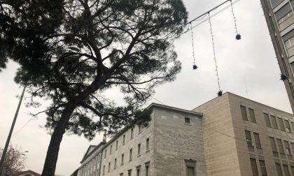 """Luminarie attaccate ai rami degli alberi, Valsecchi: """"Mi hanno smaronato per 5 anni e ora..."""""""