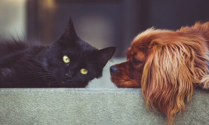 Botti di Capodanno: come proteggere i nostri amici animali