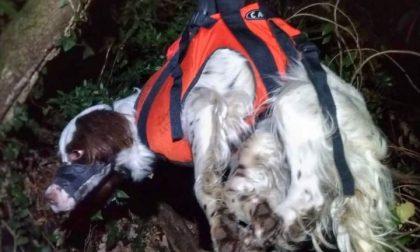Mandello, due cani precipitano da una falesia