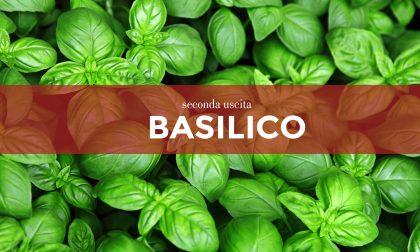 Tutti ortisti: in regalo con il Giornale di Lecco i i semi di basilico