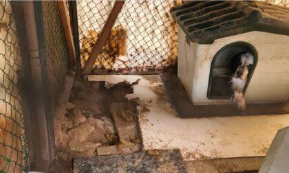Cane rinchiuso per 12 anni in un serraglio nel bosco, salvato dall'Enpa