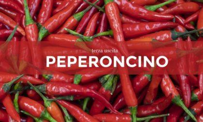 Tutti ortisti: in edicola con il Giornale di Lecco i semi di peperoncino
