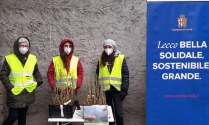 """Il """"Bosco diffuso"""" è stato distribuito ai lecchesi che hanno aderito all'iniziativa"""