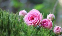 Seminiamo Bellezza, fioriture diffuse in città, adesioni entro il 10 maggio