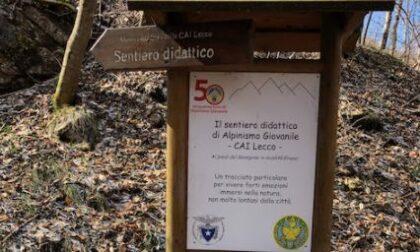 Arte e bosco in dialogo con Monti Sorgenti