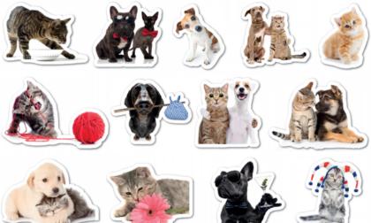 Da oggi originali stickers in regalo col Giornale di Lecco