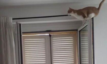 Dal gatto che si crede acrobata a quello che non vuole proprio uscire di casa... i divertenti video delle Simpatiche zampette
