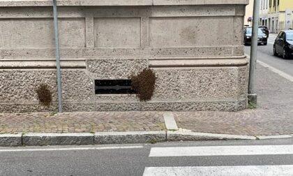 Maxi sciame di api in centro Lecco: intervento dei Vigili del Fuoco