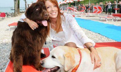 """Michela Vittoria Brambilla: """"No agli abbandoni degli animali, specialmente se accolti in casa durante il lockdown"""""""