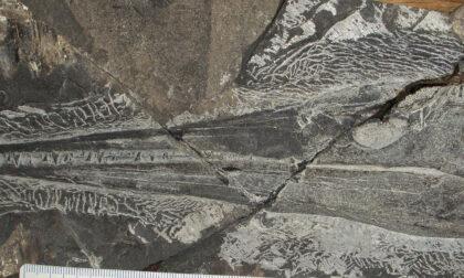 I fossili del Grignone finiscono in mostra